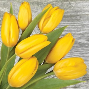 SERWETKI 33*33 DAISY 3W A'20SZT SDWI004601 Yellow Tulips on Wood